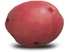 Red Chieftain Potato